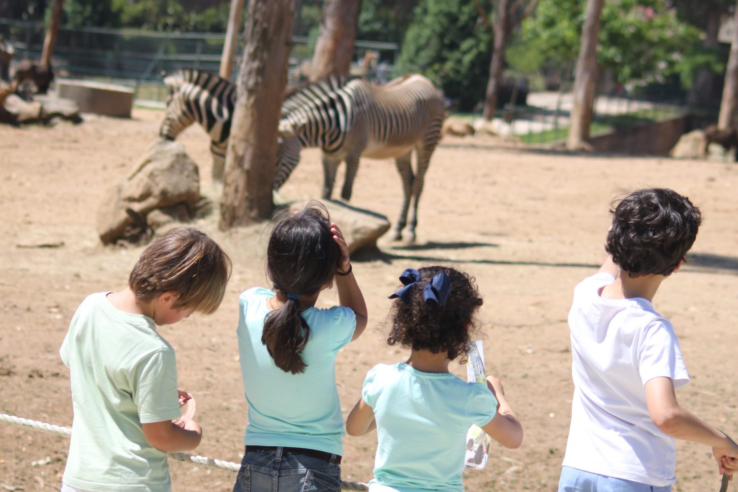 Watching the zebras at Zoo santo inacio Porto
